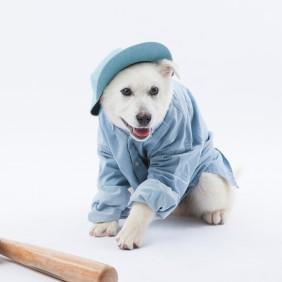 강아지 옷